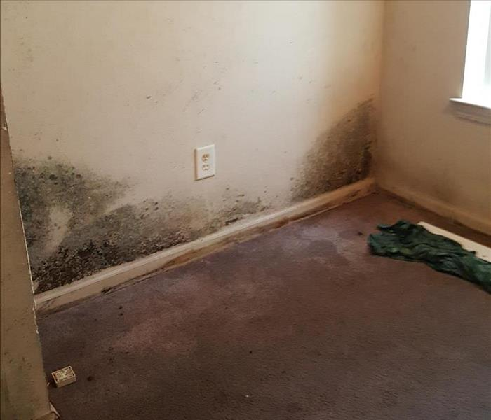 Mold Remediation in Columbus, GA Before